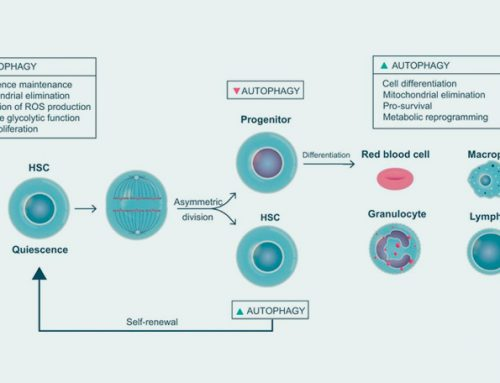 Autophagy Review Figures